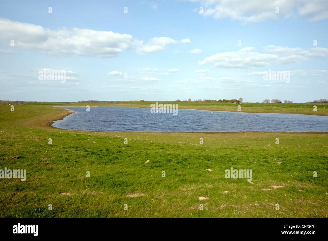 meadow at Rhine river on Bislicher Insel, Germany, North Rhine-Westphalia, Nature Reserve Bislicher Insel Stock Photo