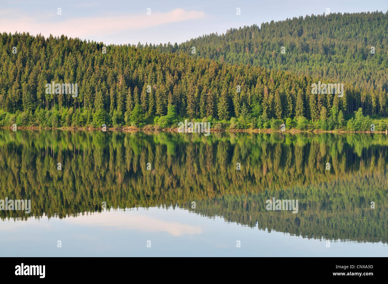 coniferous forest mirroring in Schluchsee, Germany, Baden-Wuerttemberg, Black Forest Stock Photo