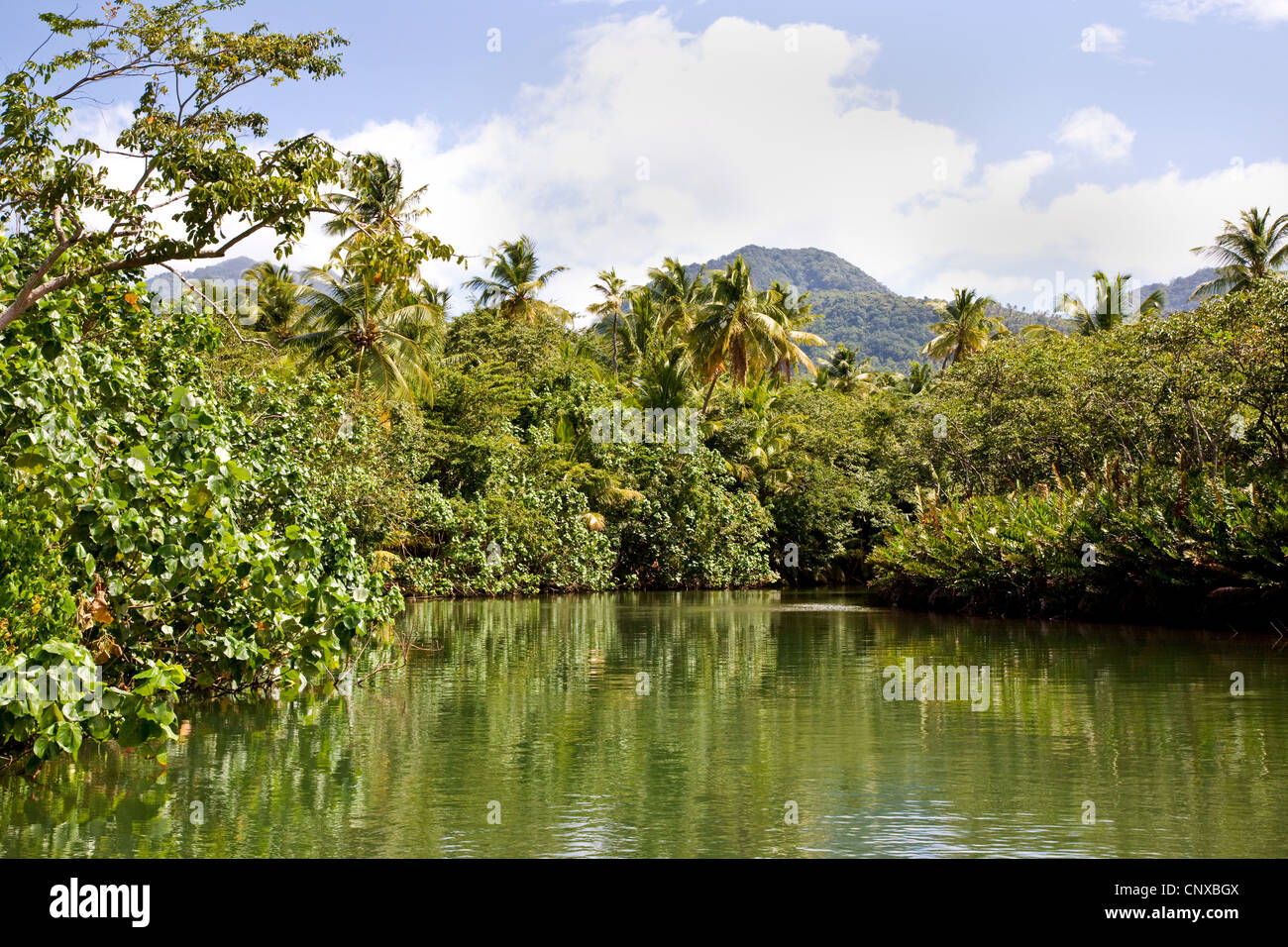 Indian River estuary near Portsmouth Dominica West Indies - Stock Image