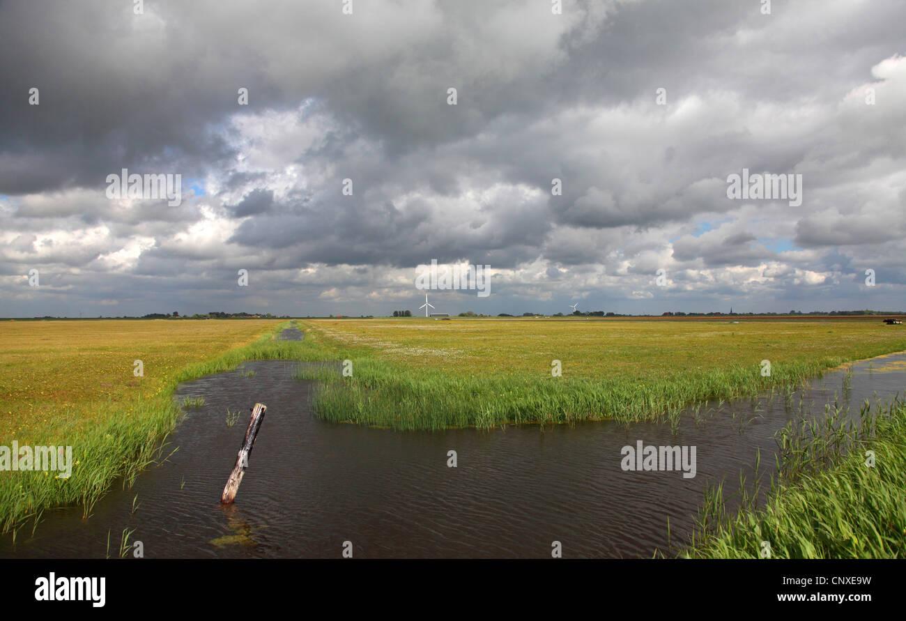 rain clouds over meadows of Workumer Waard, Netherlands, Frisia Stock Photo