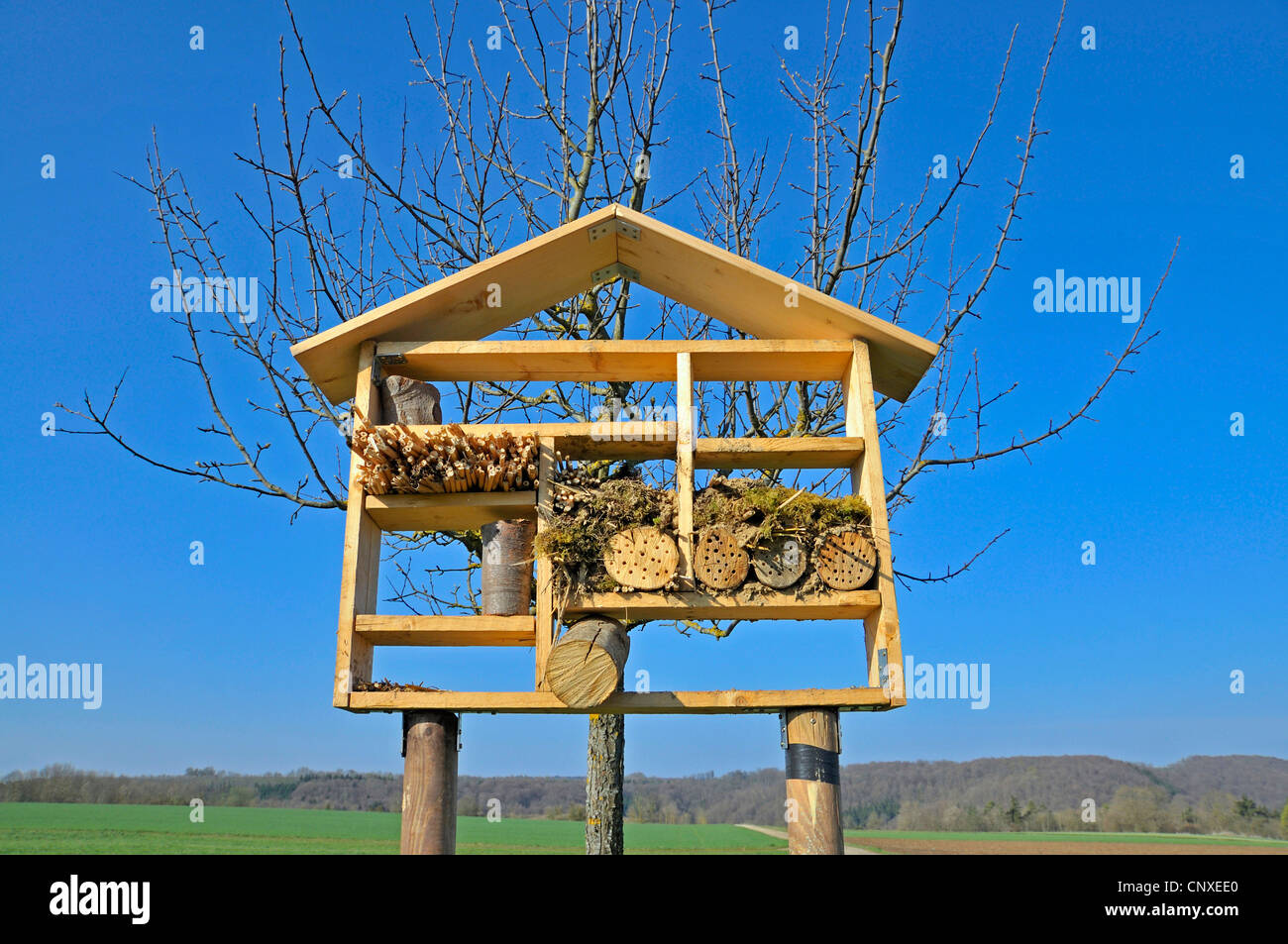 insect hotel for wild bees and other insects, Germany - Stock Image