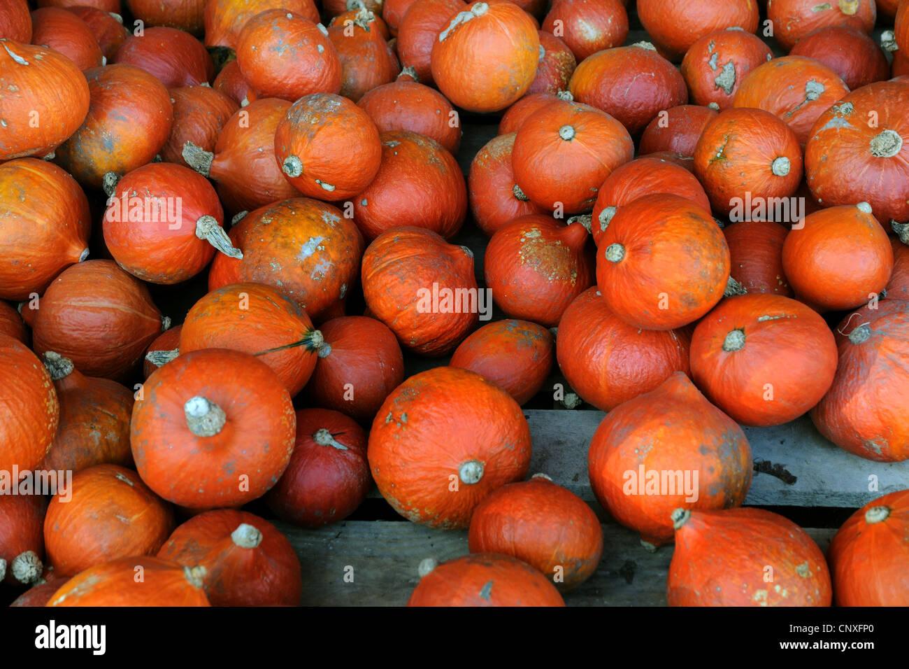red kuri squashes Stock Photo