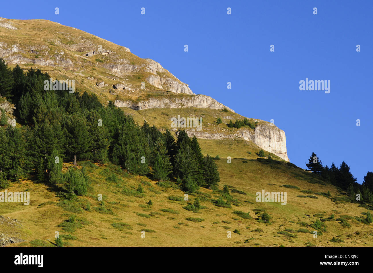 mountain slope with light conifer forest and rough meadows, Montenegro, Prokletije - Stock Image
