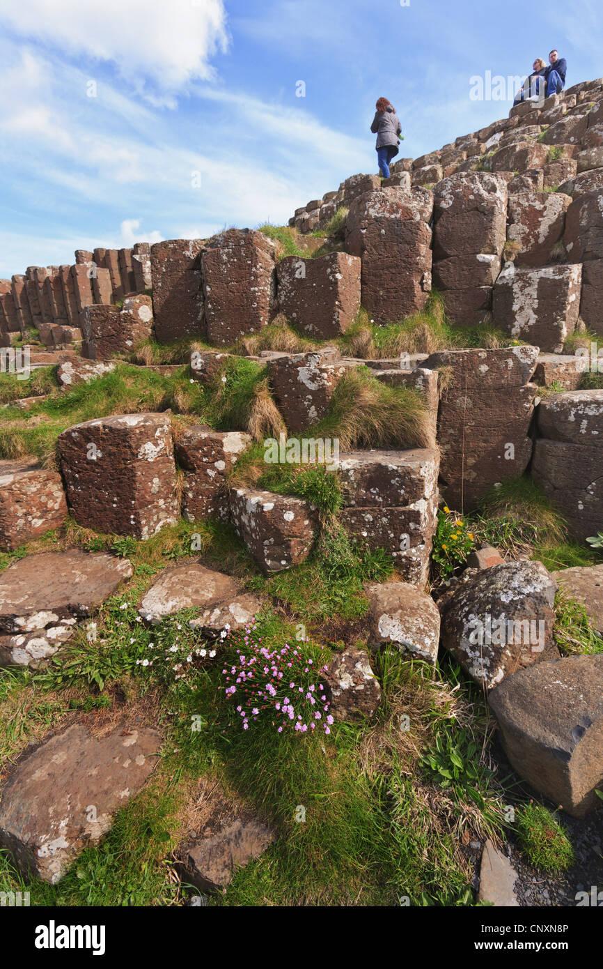columnar basalt of Giant's Causeway, Ireland, Northern Ireland - Stock Image