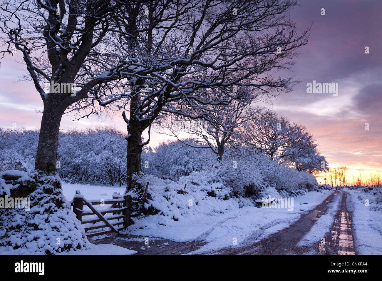 Snow covered trees beside a country lane, Exmoor, Somerset, England. Winter (January) 2012. - Stock Image