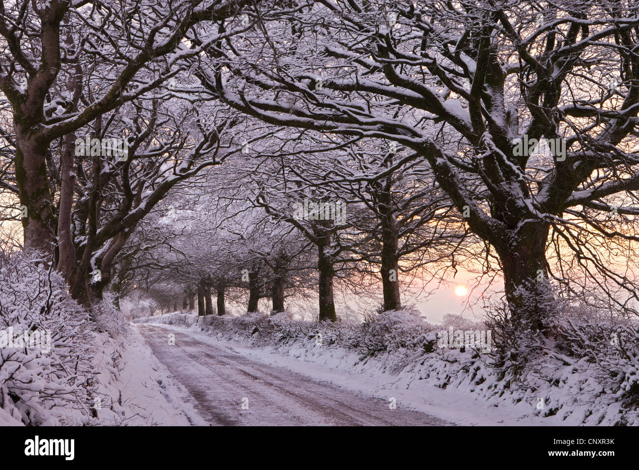 Tree lined country lane laden with snow, Exmoor, Somerset, England. Winter (January) 2012. - Stock Image