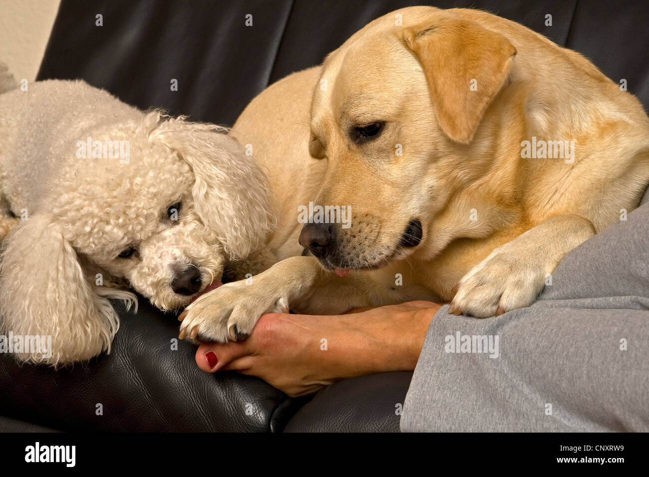 Why Does Dog Lick My Feet so much ? -