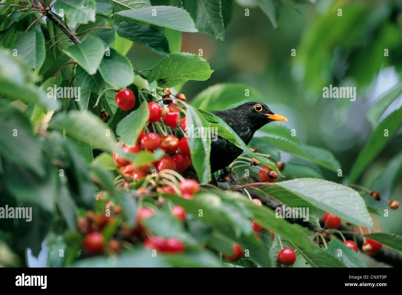CNXT BLACKBIRD WINDOWS 8.1 DRIVER