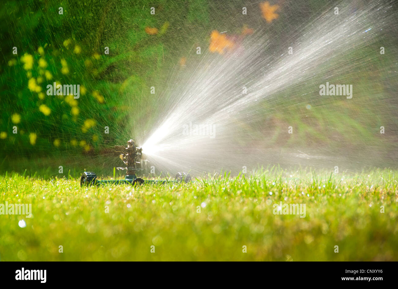 Lawn sprinkler spraying water over green grass in summer - Stock Image