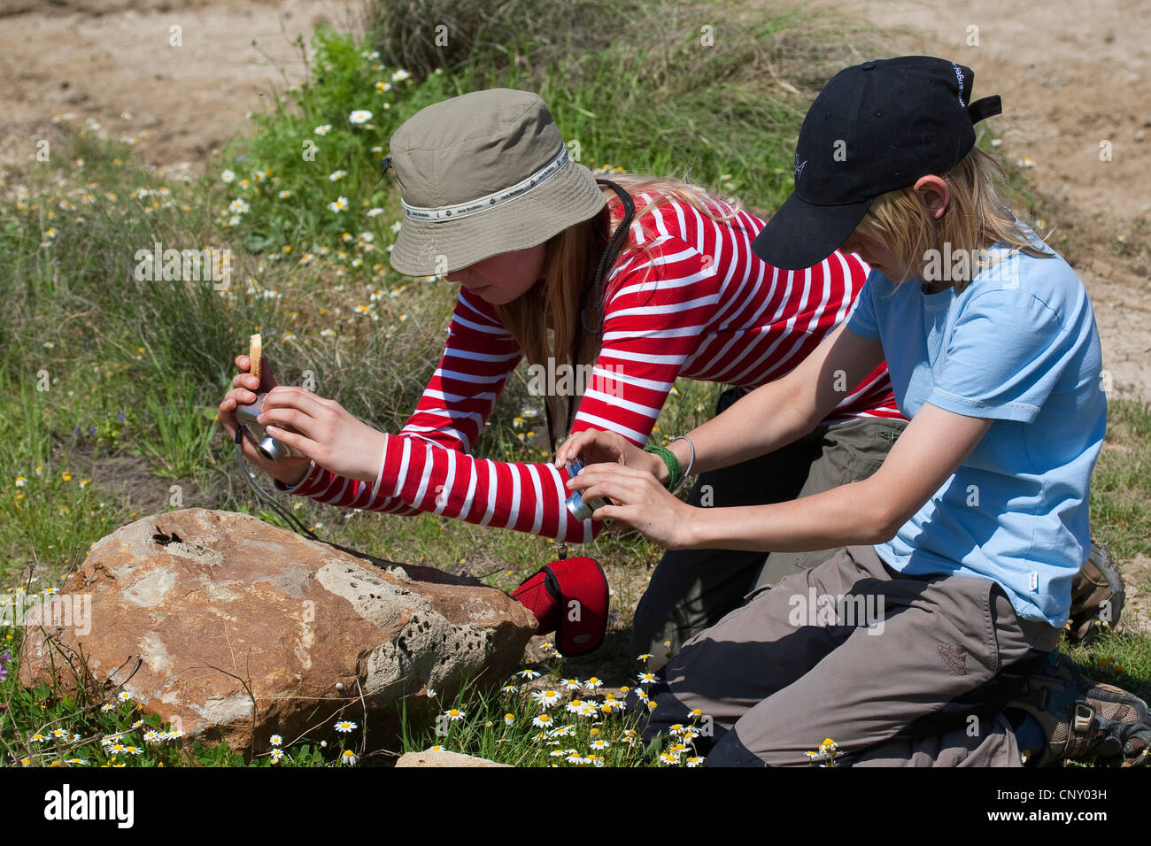 wall bee, mason bee (Megachile parietina, Chalicodoma parietina, Chalicodoma muraria), two children taking photos - Stock Image