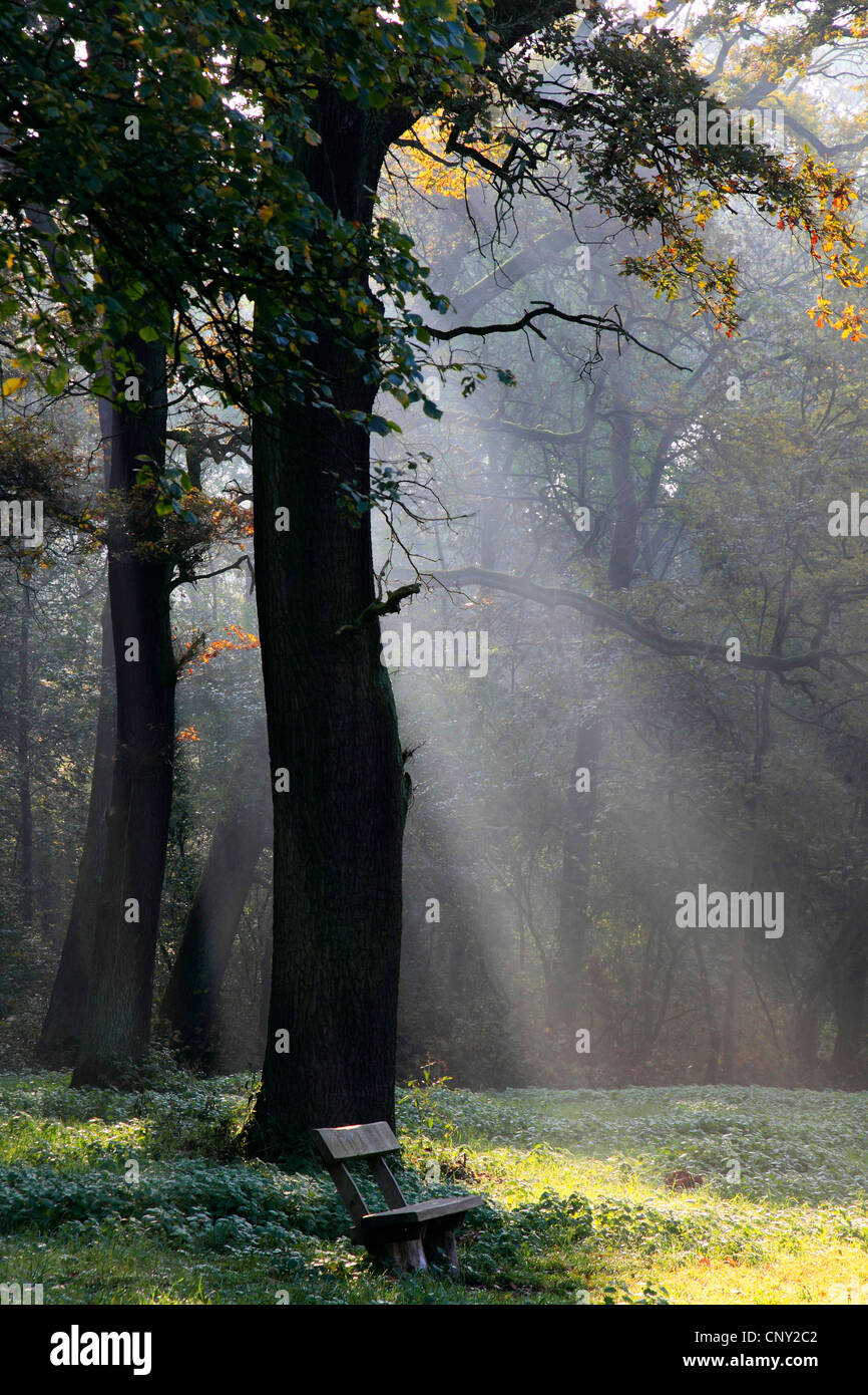 sun beams in autumn forest, Germany - Stock Image