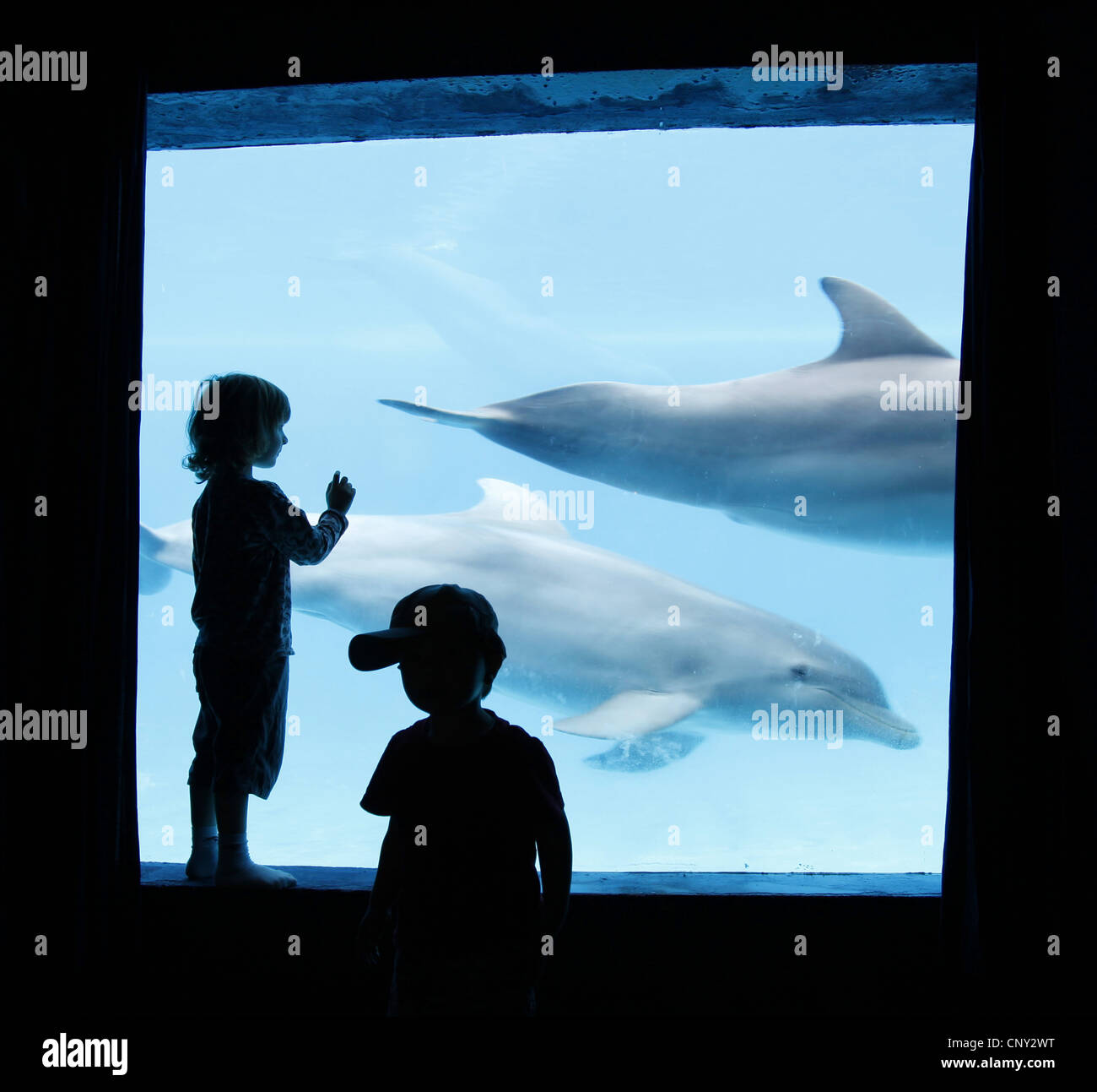 two little children standing in front of a window of a dolphinarium Stock Photo