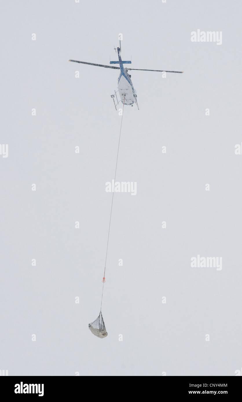 Polar bear air lift - Stock Image