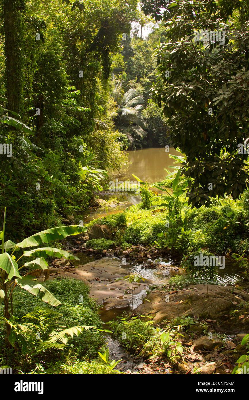 vegetation at a riverside in Khao Phra Thaeo national park, Thailand, Phuket, Khao Phra Thaeo National Park - Stock Image