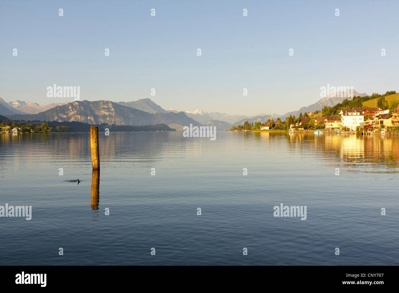 summerly view over Lake Lucerne at the Alps, Switzerland, Berner Alpen, Kuessnacht - Stock Image