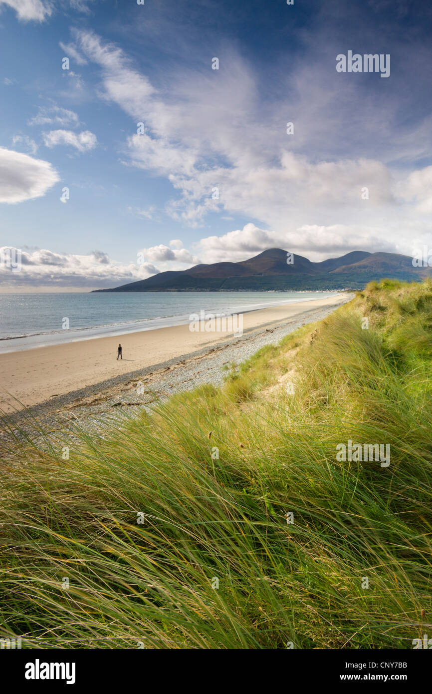 Person walking alone along Dundrum Bay, County Down, Northern Ireland - Stock Image