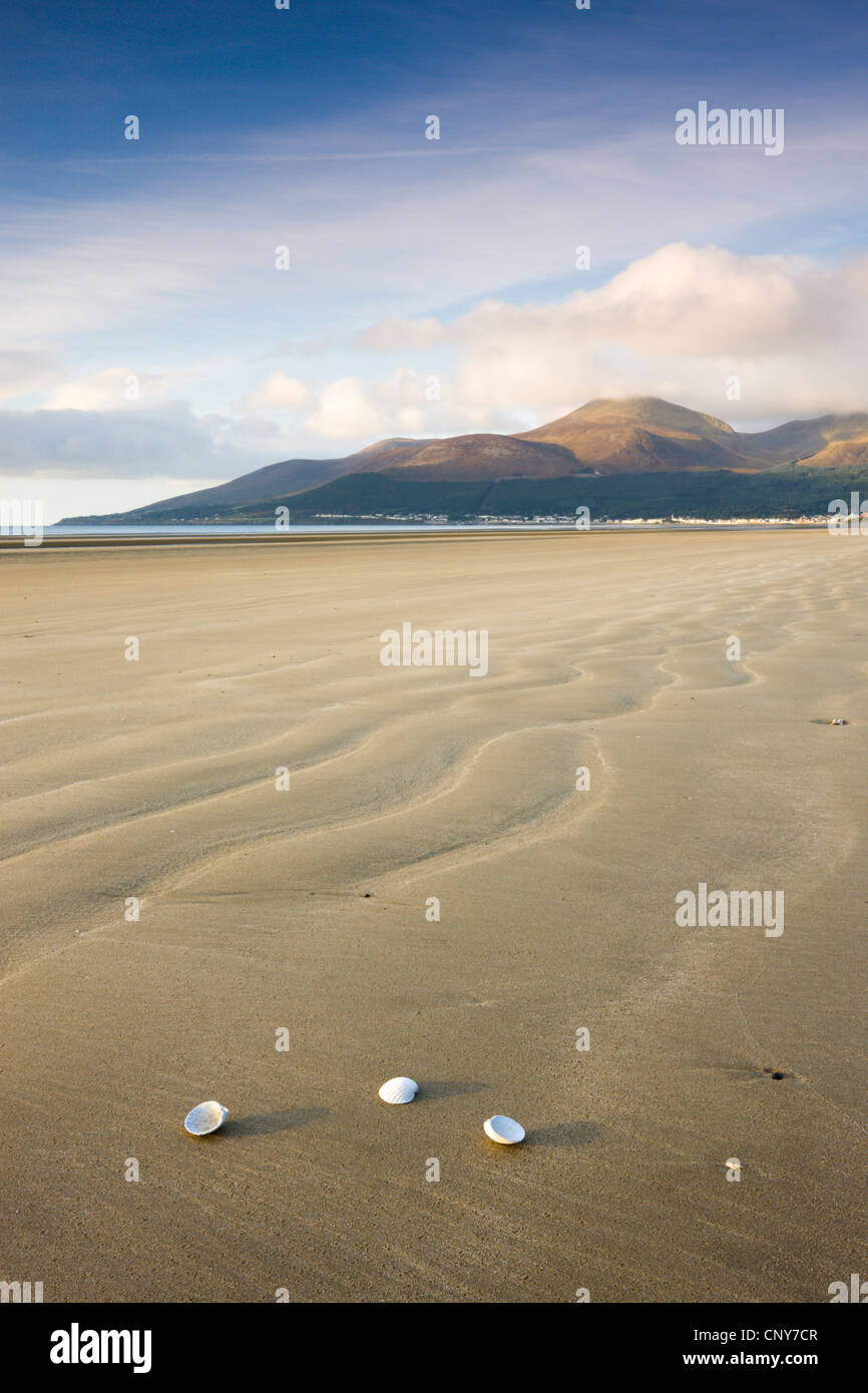 Shells on Dundrum Bay, looking towards the Mountains of Mourne, County Down, Northern Ireland - Stock Image