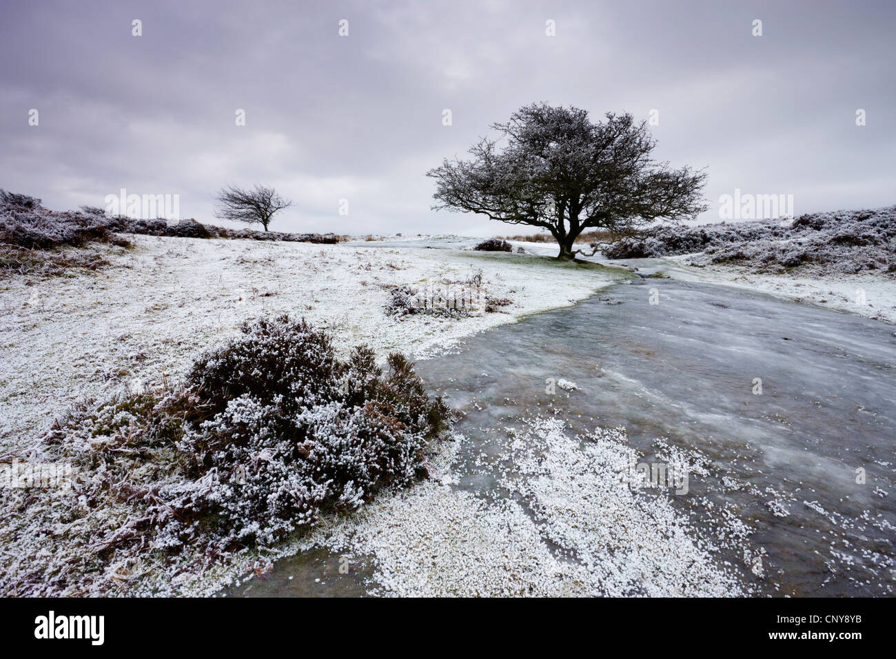 Snow and ice on Porlock Common in Winter, Exmoor National Park, Somerset, England. January 2009 - Stock Image
