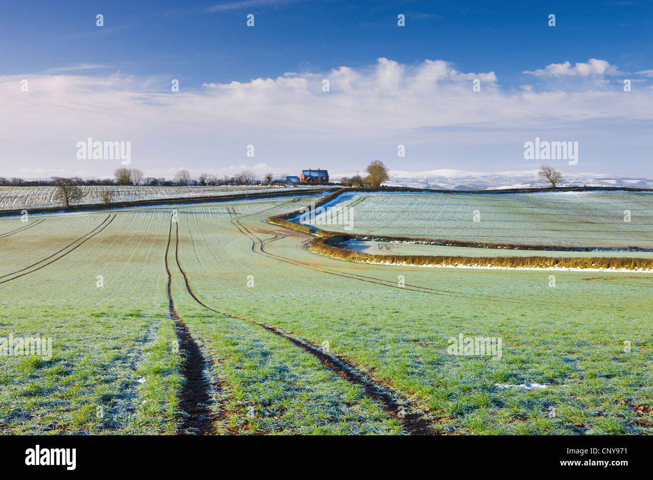 Frost covered farmland in Morchard Bishop, Mid Devon, England. March 2009 - Stock Image