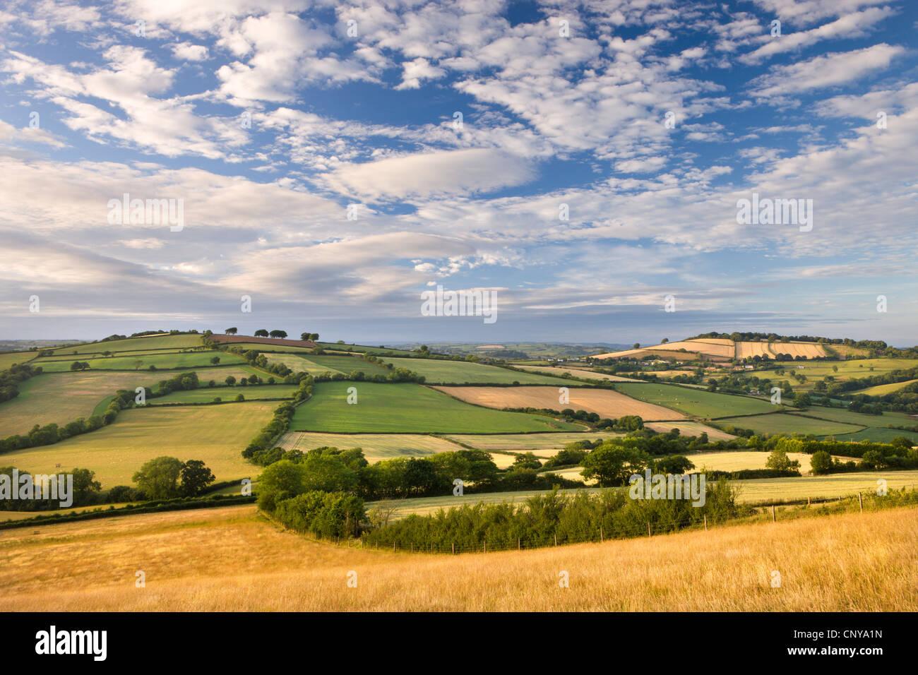Beautiful rolling Devon countryside beneath a gorgeous sky, Raddon Hill, Devon, England. Summer (July) 2010. - Stock Image