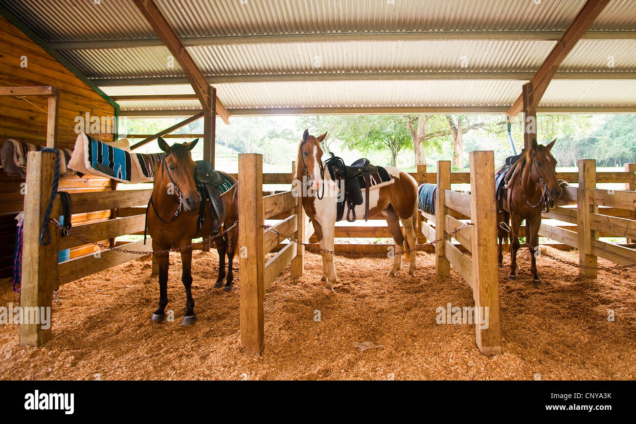 horse stables at the lodge at chaa creek, belize - Stock Image