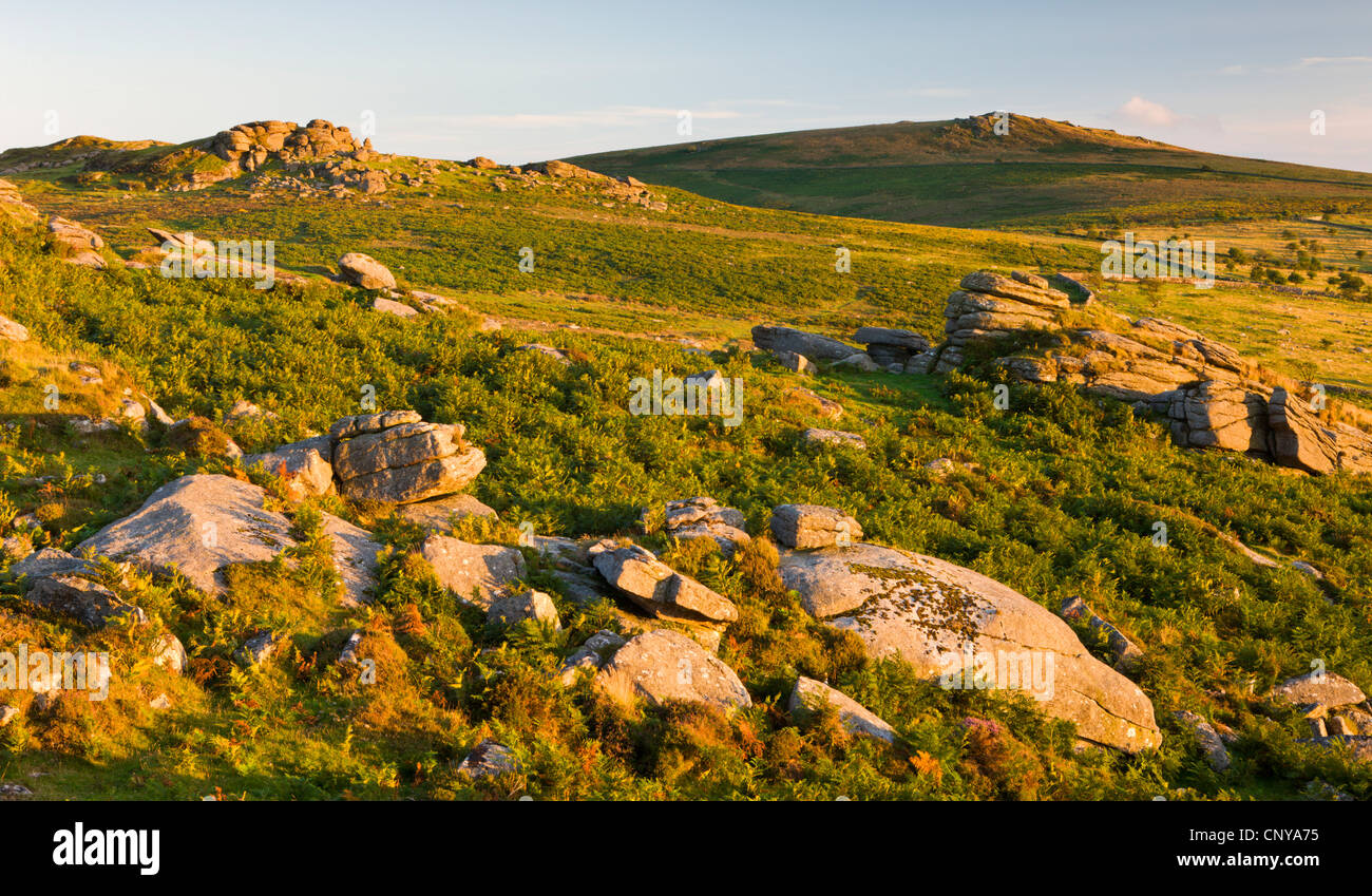 Gorgeous low evening sunshine lights up the rocky moorland leading to Saddle Tor and Rippon Tor, Dartmoor - Stock Image