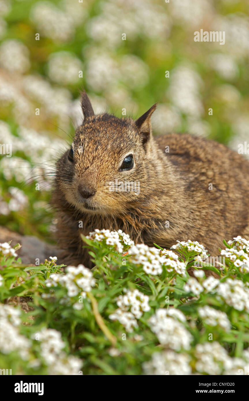 squirrels sitting on a carpet of white blossoms Stock Photo