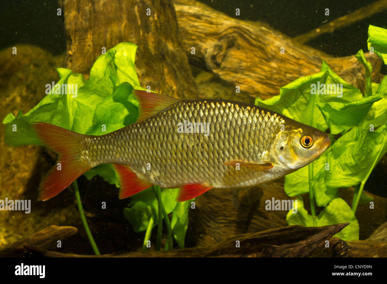 Fish Swimming Stock Photos & Fish Swimming Stock Images - Alamy