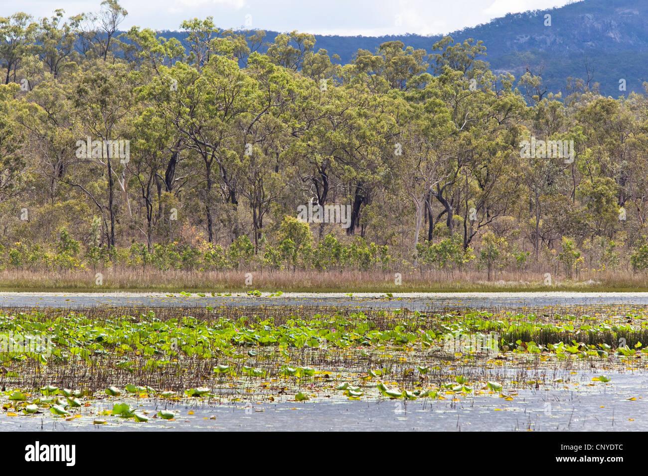 Maareba Wetlands, Australia, Queensland, North Queensland Stock Photo