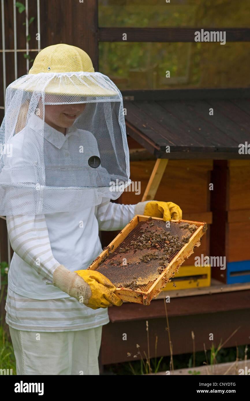 honey bee, hive bee (Apis mellifera mellifera), girl in beekeeper clothing controlling honeycombs, Germany - Stock Image