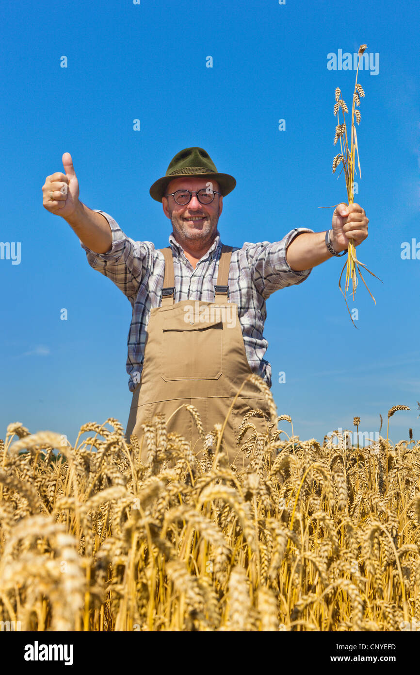 bread wheat, cultivated wheat (Triticum aestivum), farmer contently standing in his mature wheat field raising the - Stock Image