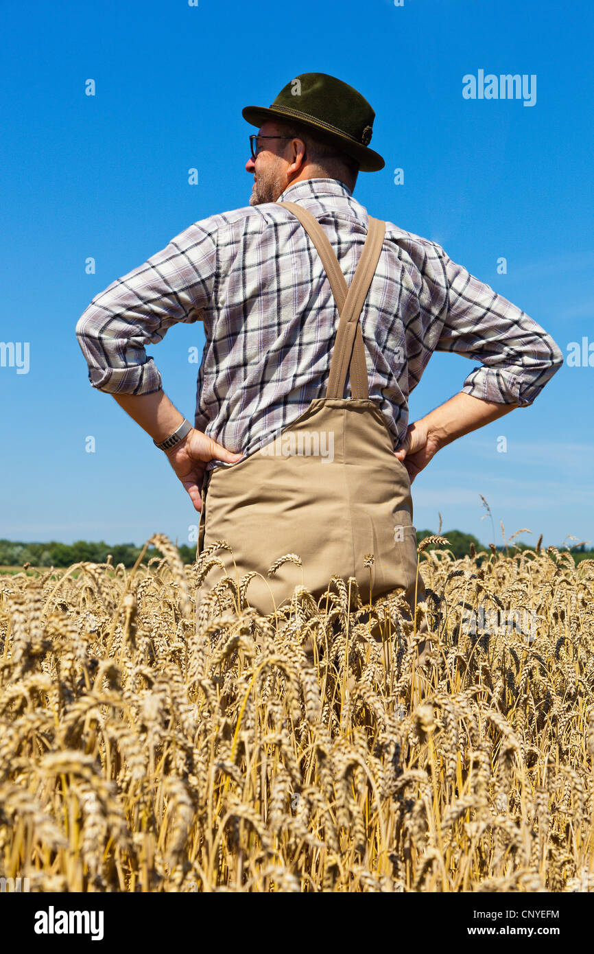 bread wheat, cultivated wheat (Triticum aestivum), content  farmer standing in his mature wheat with the arms akimbo, - Stock Image