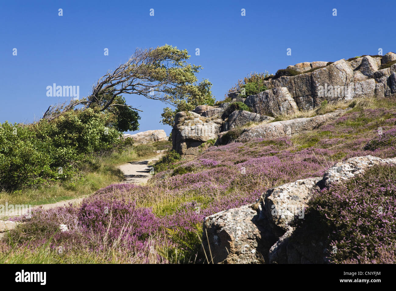 rocky coastal landscape at Hammer Odde, Hammeren, northern tip of the island, Denmark, Bornholm, Hammer Odde - Stock Image
