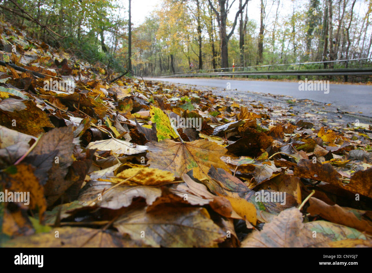 autumn leaves on a pavements at a street, Germany, North Rhine-Westphalia - Stock Image