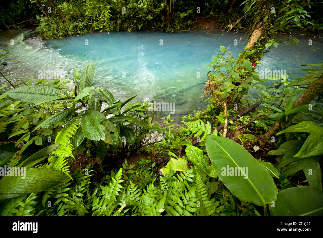 the blue waters of the Rio Celeste in VolcanTenorio National Park, Costa Rica, Central America - Stock Image