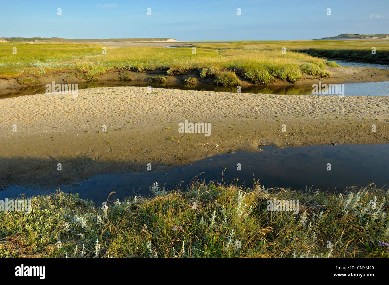 tideway through a salt meadow, Netherlands, Northern Netherlands,  Texel Stock Photo
