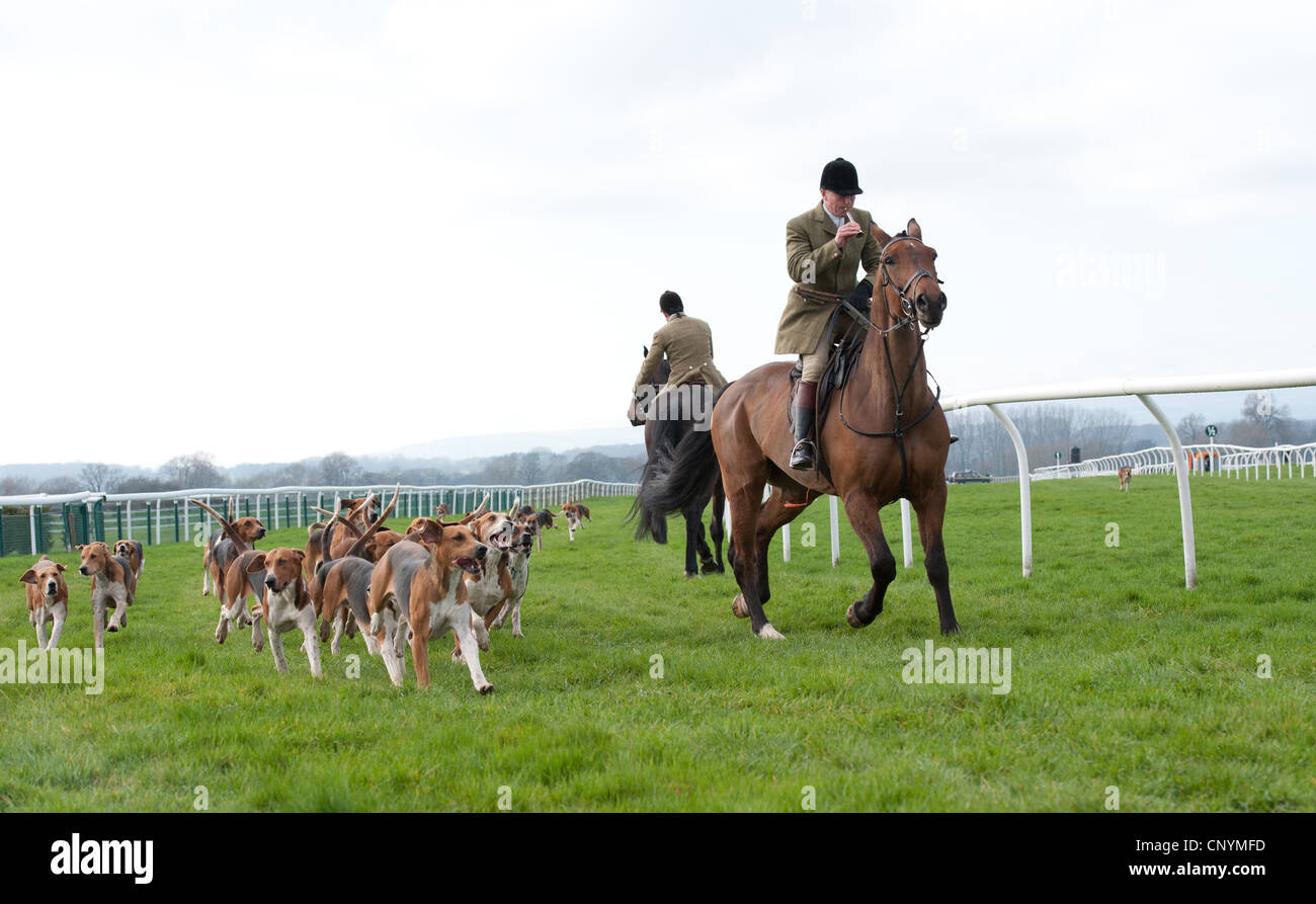 Fox hounds and Master of the Hunt - Stock Image
