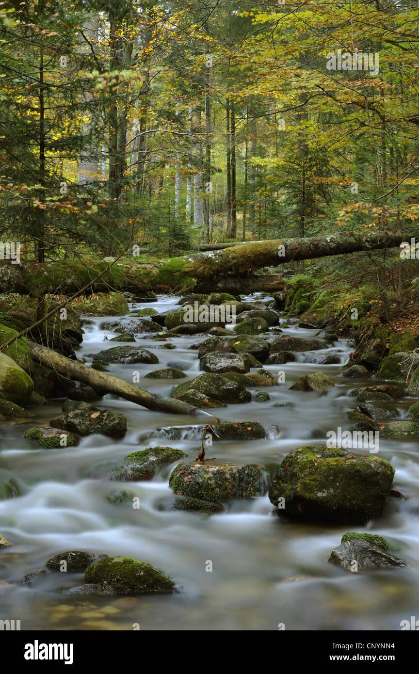 Kleine Ohe, Germany, Bavaria, Bavarian Forest National Park - Stock Image