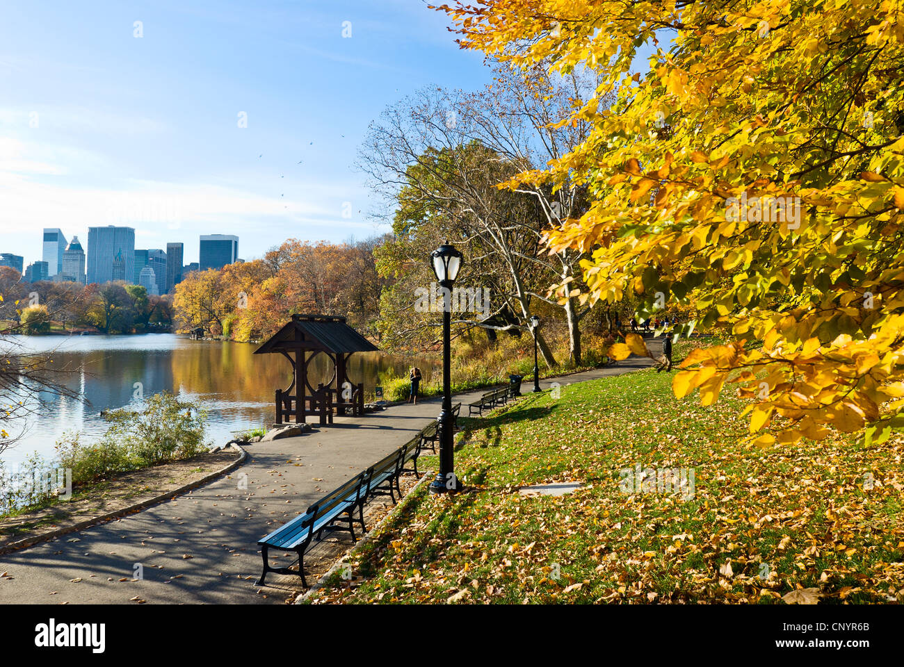 Fall leaves at the Lake in Central Park, New York City in Autumn - Stock Image