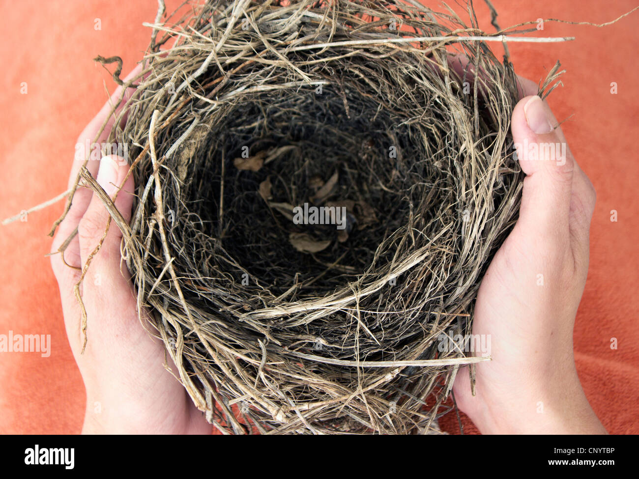 Hands holding empty nest. - Stock Image