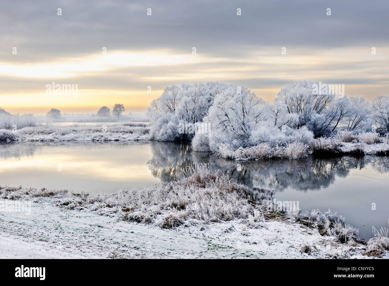 Elbe landscape covered with hoar frost, Germany, Kirchwerder, Hamburg Stock Photo