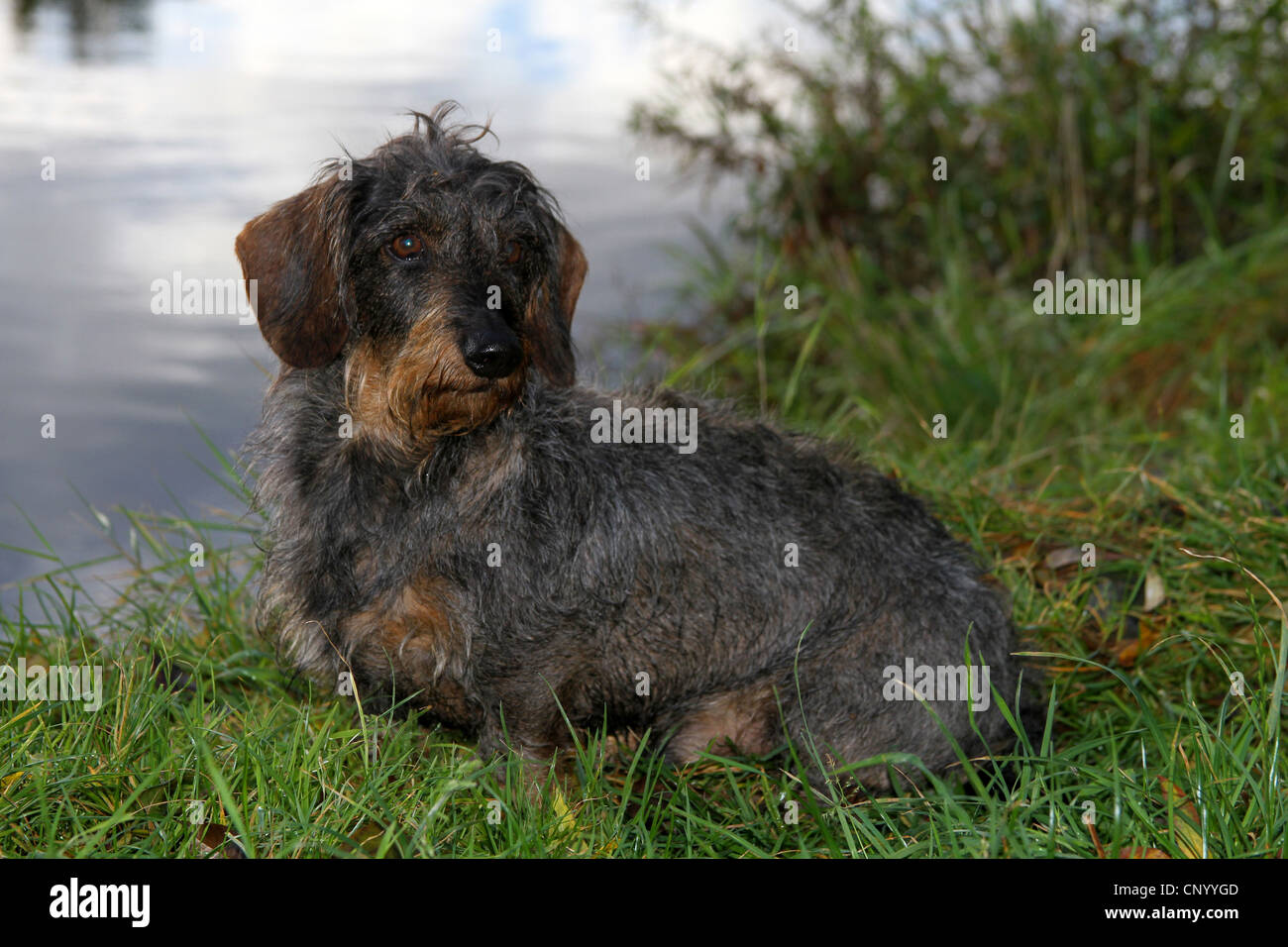 G Haired Stock Photos & G Haired Stock Images - Alamy