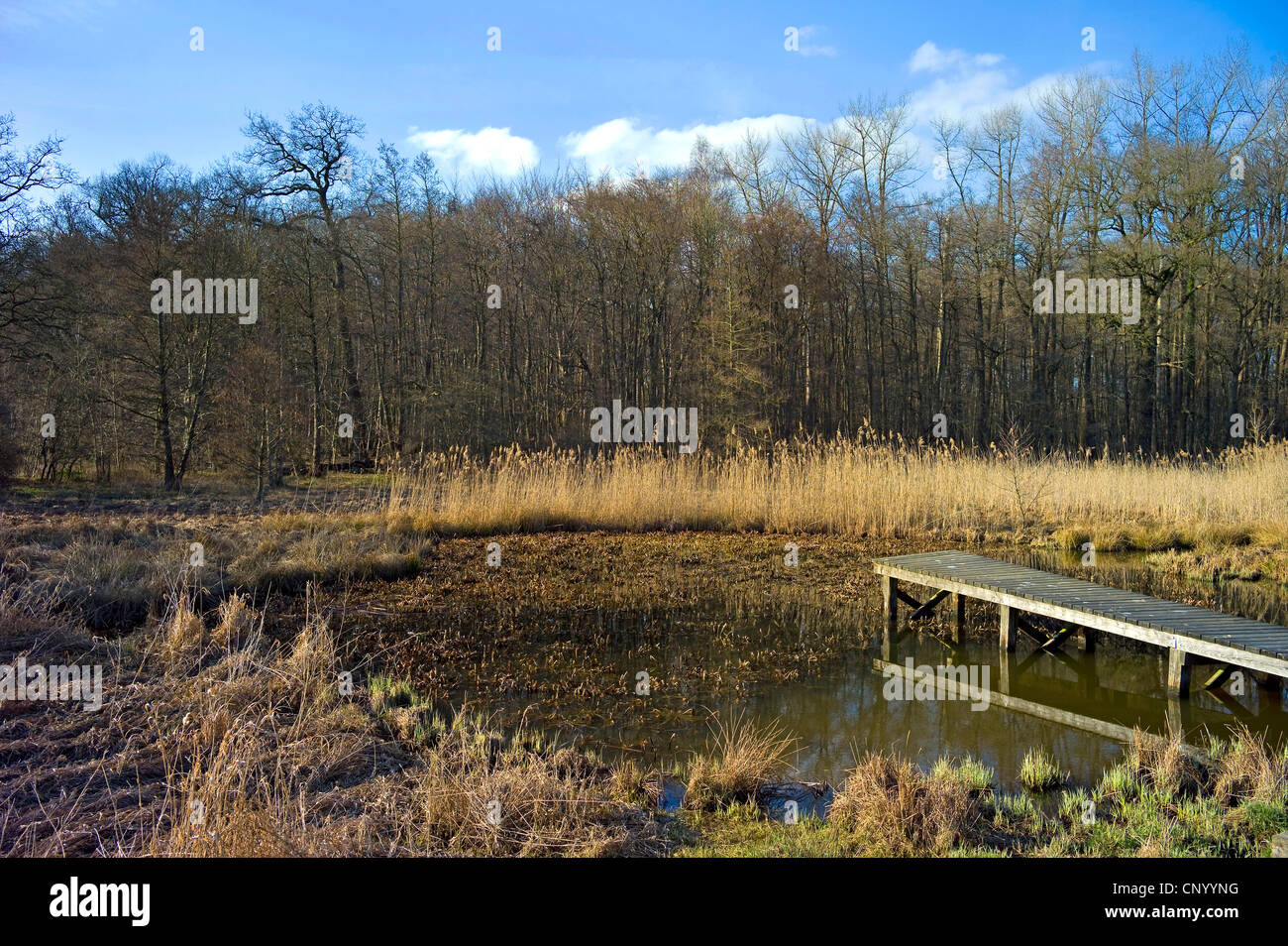 crab's-claw, water-soldier (Stratiotes aloides), silting up pond with boardwalk and water-soldier, Germany, Lower Stock Photo