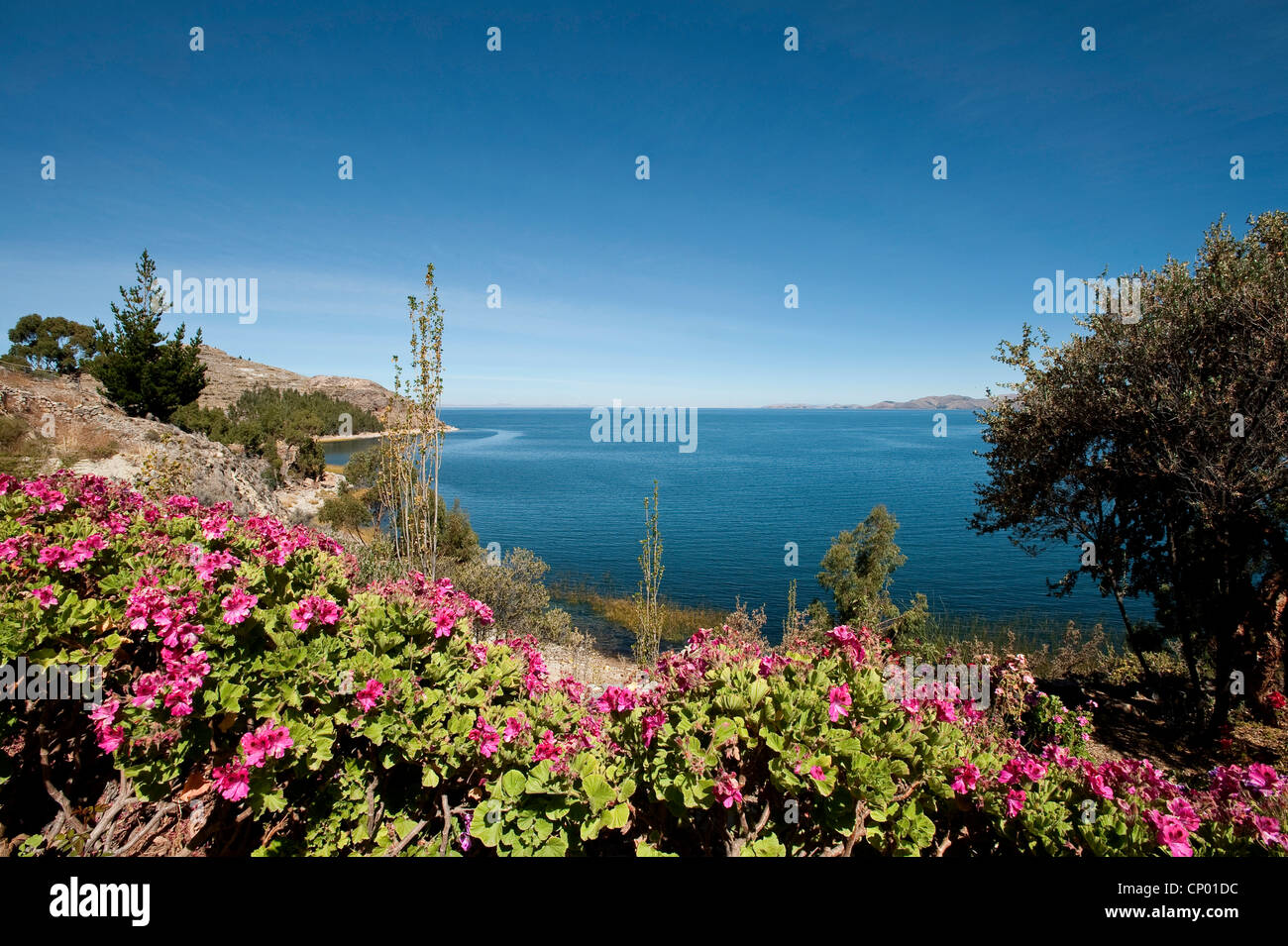 view from the blooming shore down the cliffs at Lake Titicaca, Peru, Taquile Island, Lake Titicaca - Stock Image