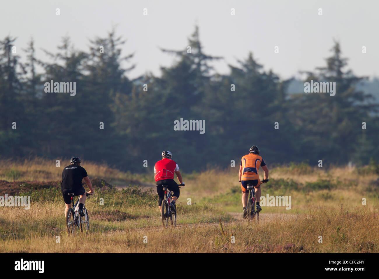 Cyclists in natur, Denmark, Midtjylland, Jylland - Stock Image