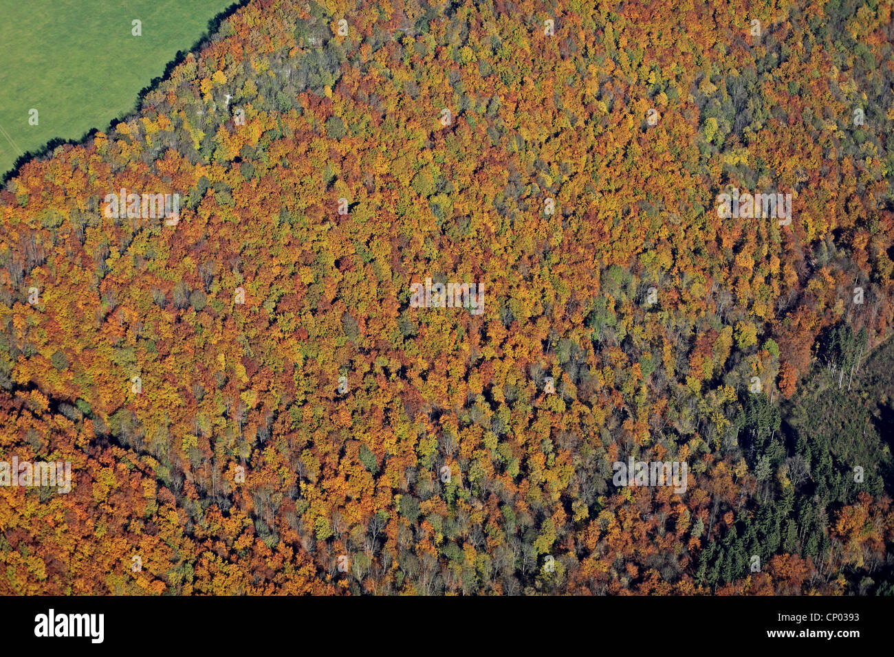 autumn forest in Swabian Alb , Germany, Baden-Wuerttemberg, Swabian Alb - Stock Image