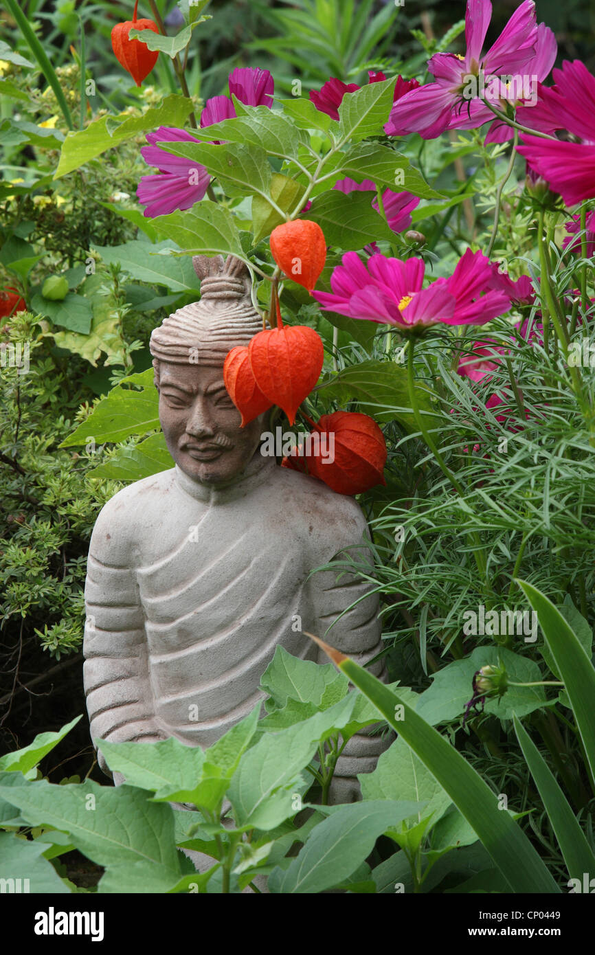garden cosmos, Mexican aster (Cosmos bipinnatus), Buddhistic sculpture in a flowerbed - Stock Image