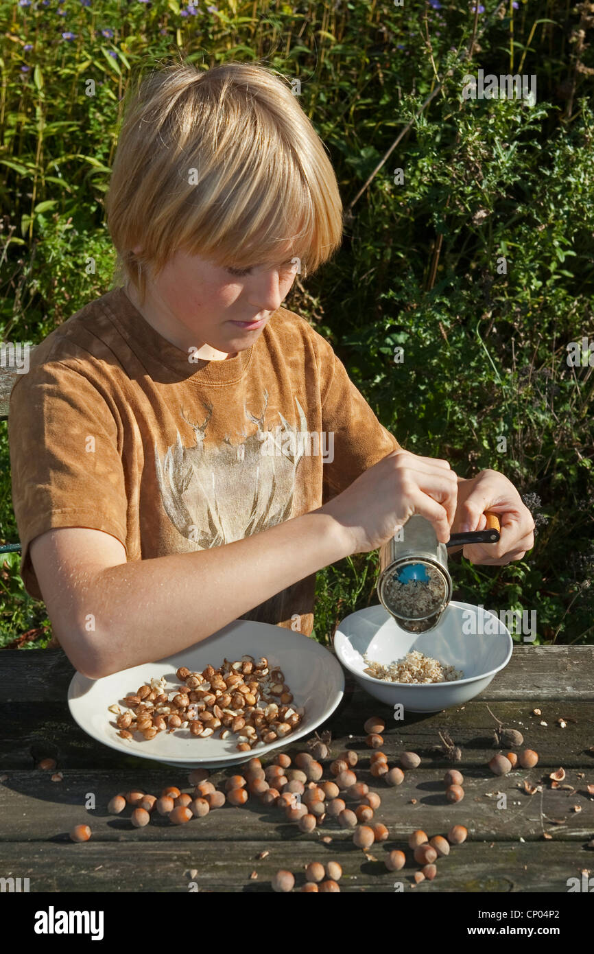 Common hazel (Corylus avellana), boy sitting at the garden table milling self-collected hazelnuts with a hand mill - Stock Image