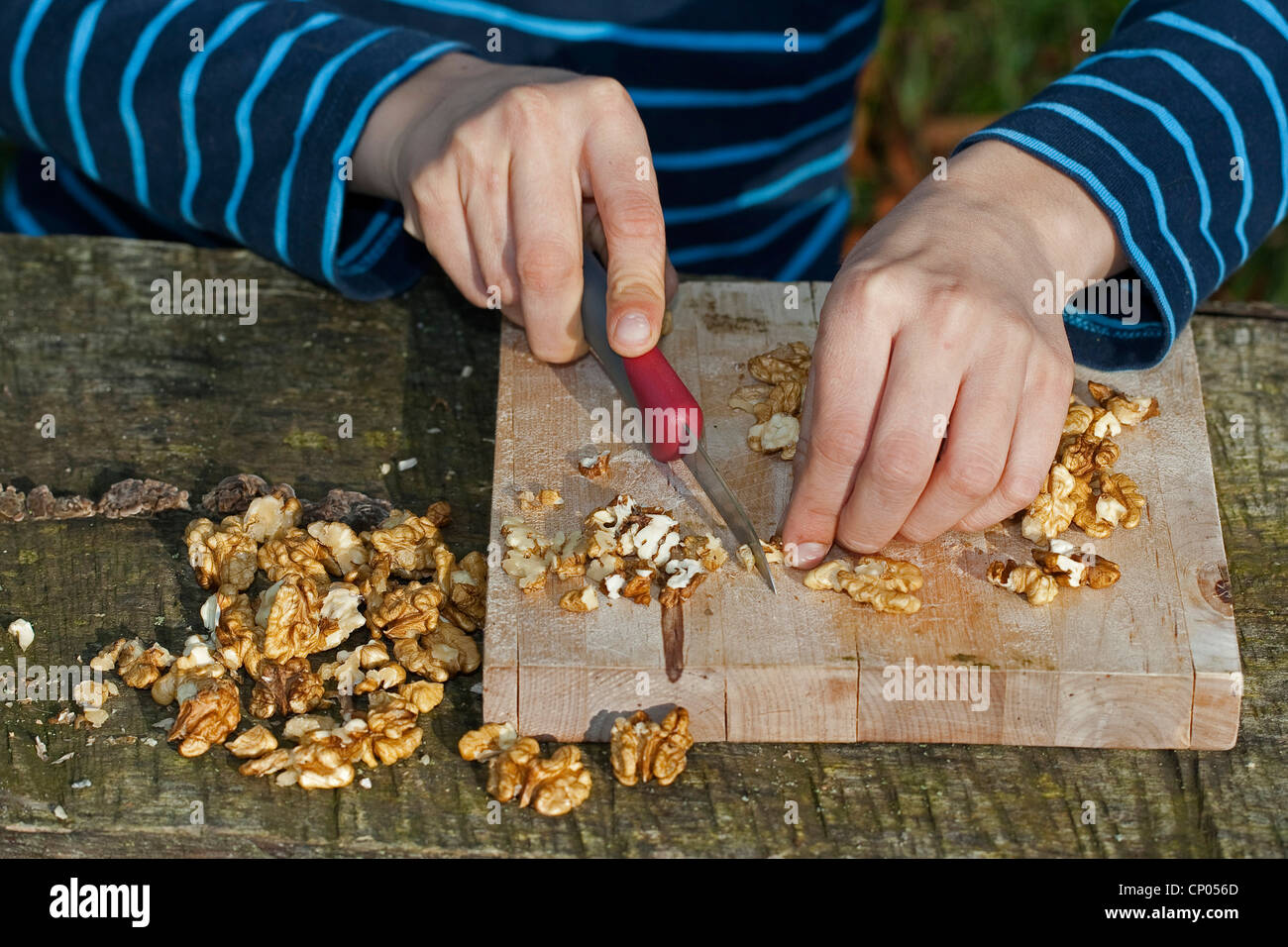 boy making pesto from self-collected walnuts and sunflower seeds, olive oil and parmesan cheese, walnuts are hackled, - Stock Image