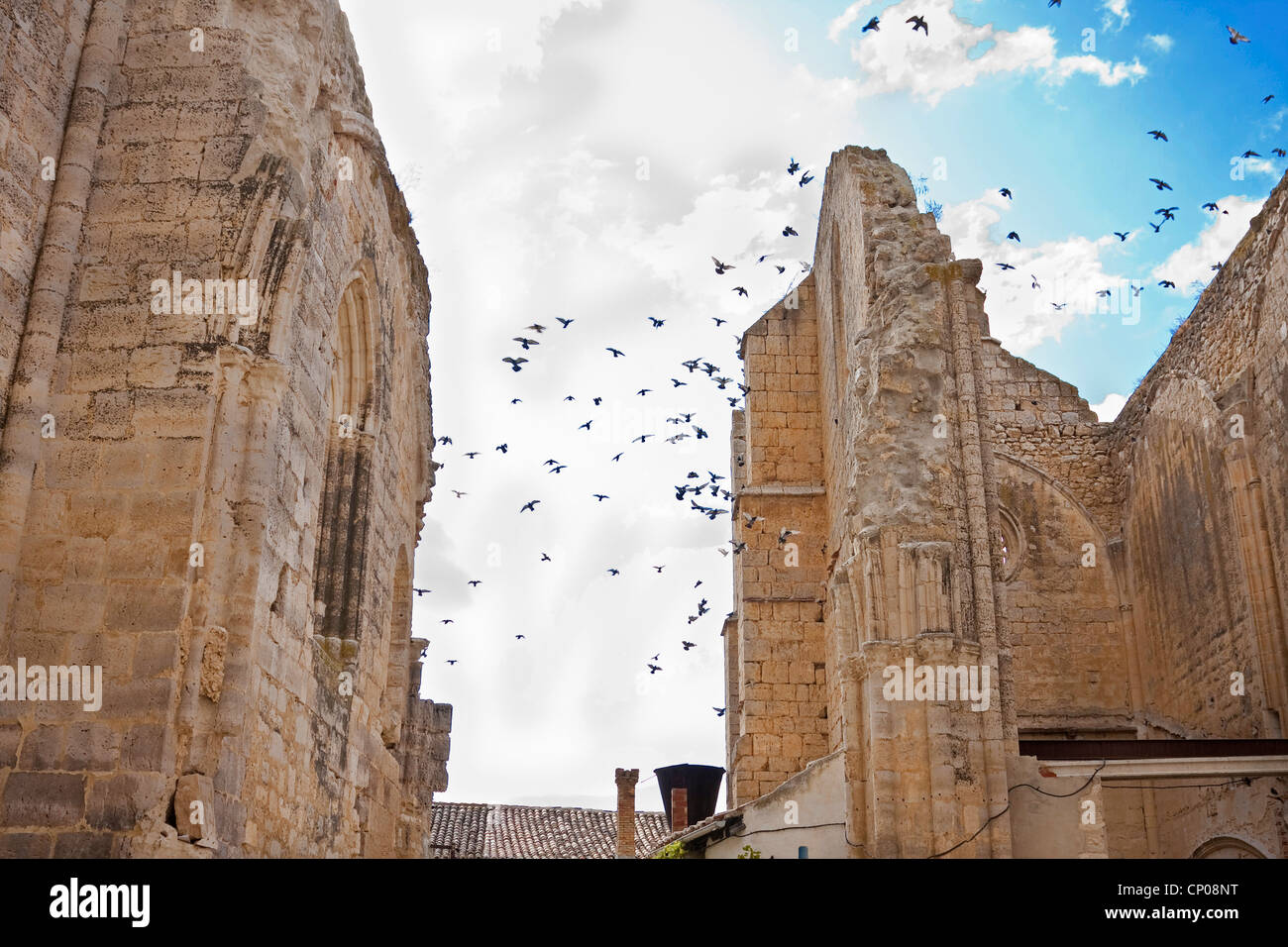 pigeons flying ver the ruin of Antonius church, Spain, Kastilien und Le�n, Burgos, San Anton - Stock Image